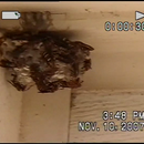 Removing a Wasp Nest