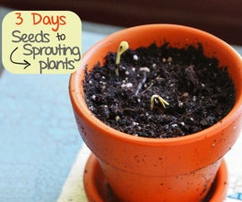 3 Days from Seed to Sprouting Plants