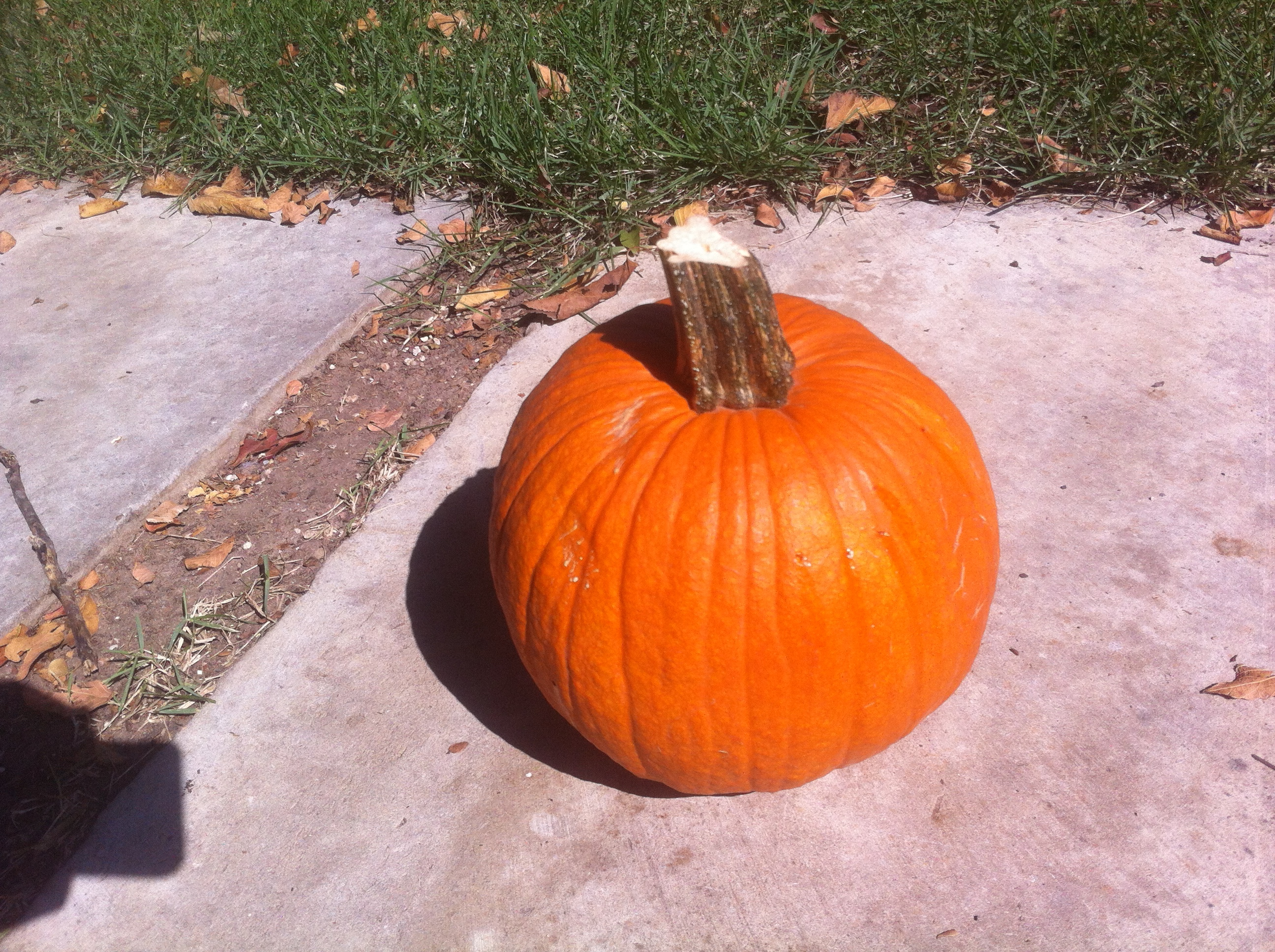 Picture of How to Re-use Your Pumpkin After Halloween