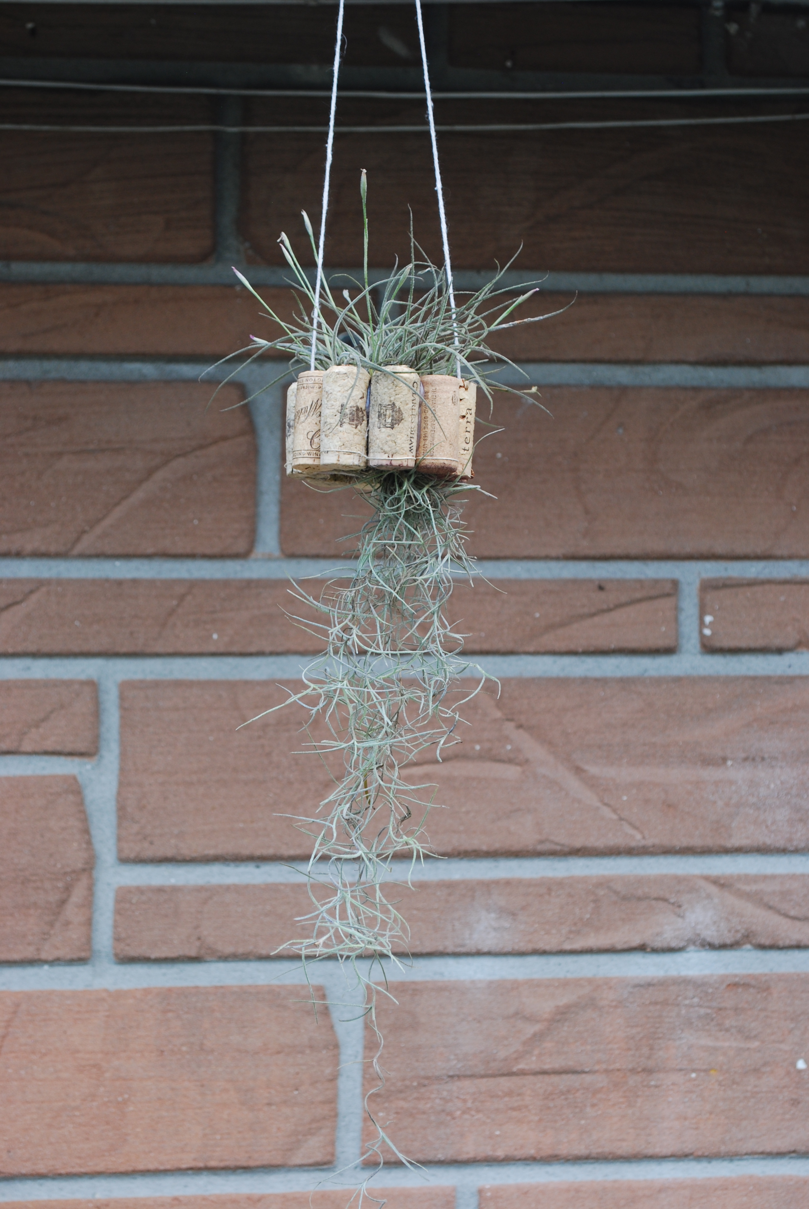 Picture of Hanging Air Plant Basket From Recycled Wine Corks