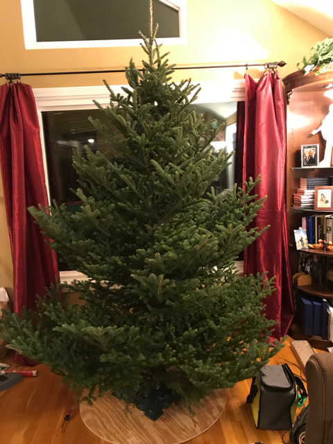 Picture of Mount the Tree
