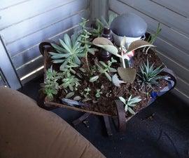 Coat rack to cactus garden