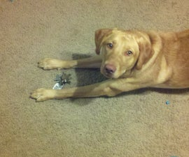 How to teach your dog to find your keys
