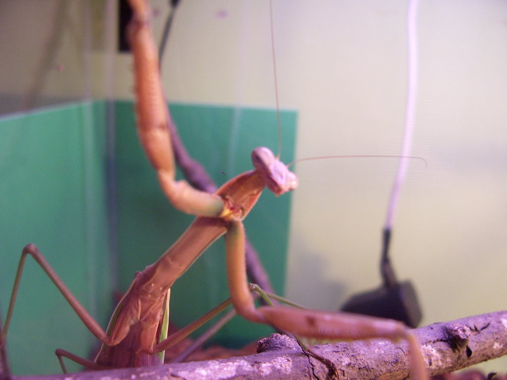 How To Care For A Praying Mantis 4 Steps Instructables