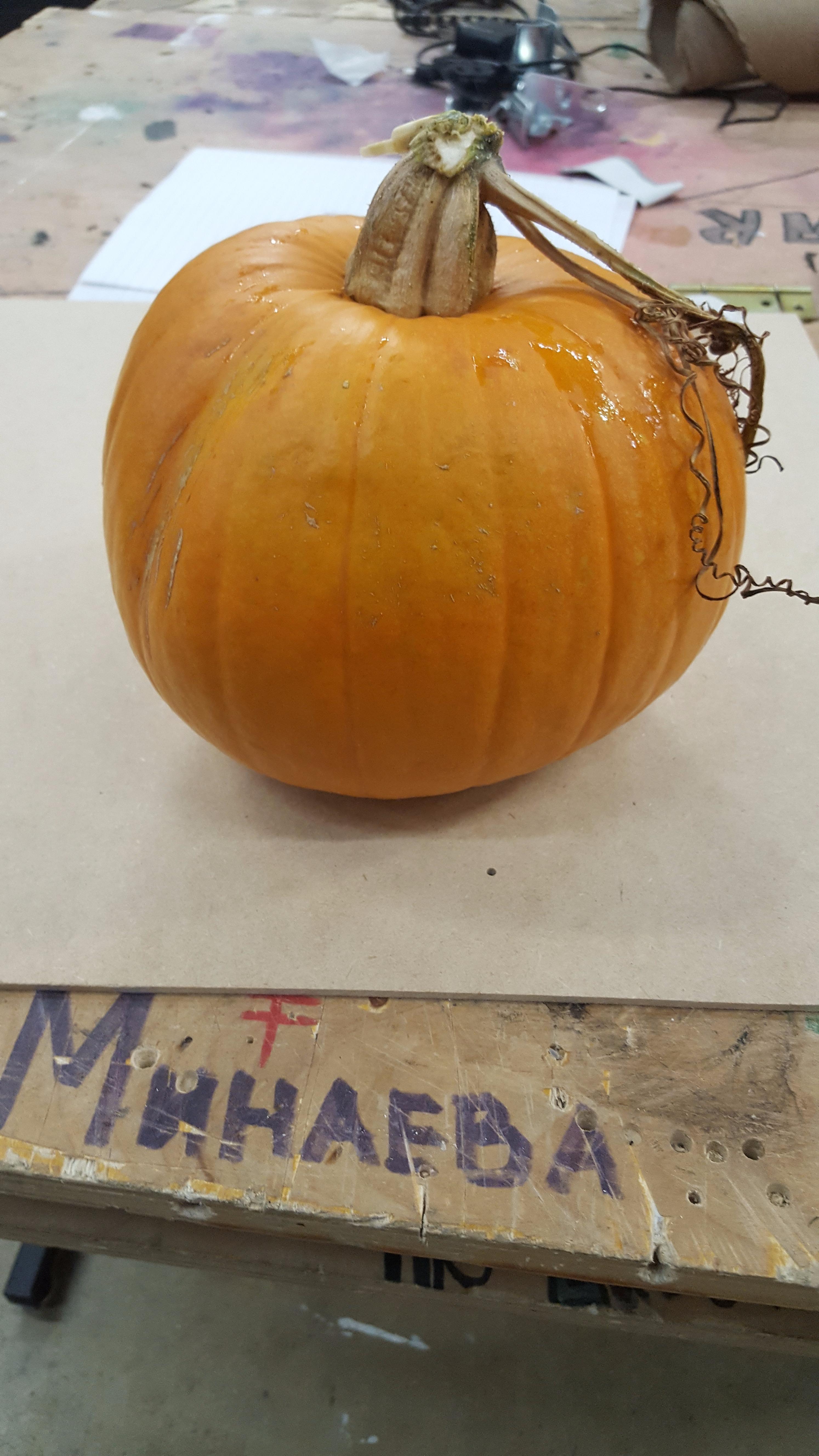 Picture of Find a Pumpkin.