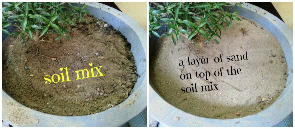 Picture of Mixing Soil