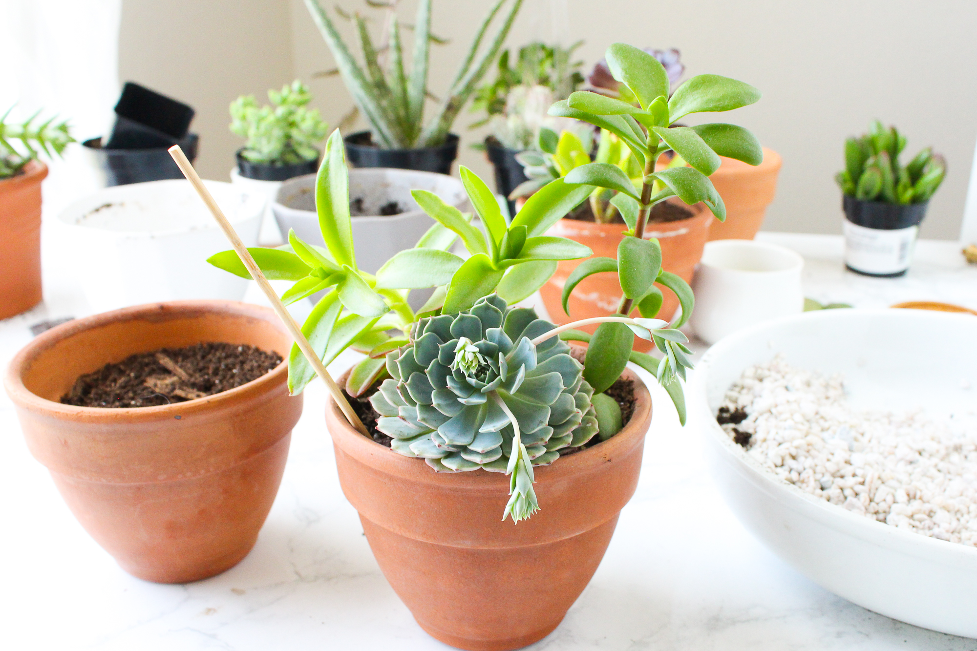 Picture of How to Remove Plants From a Ceramic or Terra Cotta Pot
