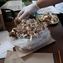 Making a Mushroom Log Overview
