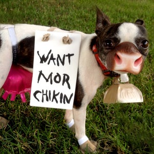 Chick Fil a Dog Costume