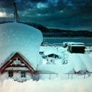 herwood_forest_alaska