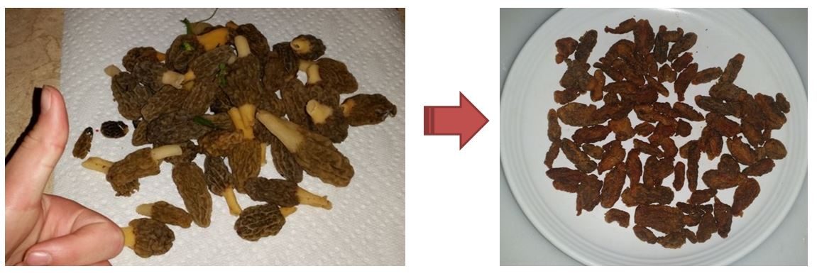 Picture of Fried Morel's (Early Season Variety)