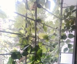 Window Garden on Kitchen & Garden Waste and Water