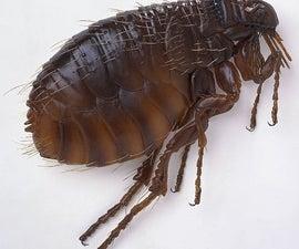A Simple Flea Solution