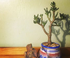 How to Care for Succulents (plants)