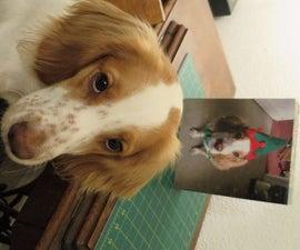 How to Make a Dogvent Calendar