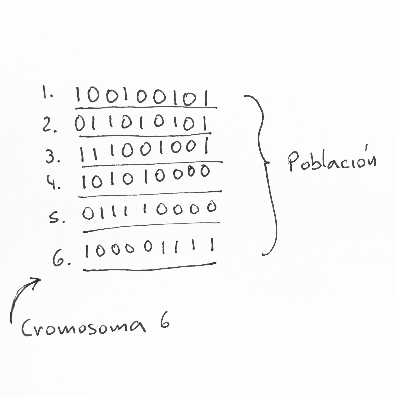 Picture of Evolución Y Definiciones
