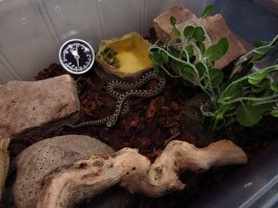 Snake Tub