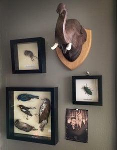 Small Preserved Animal Shadowbox Display