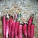 Medicinal Radish Pickle