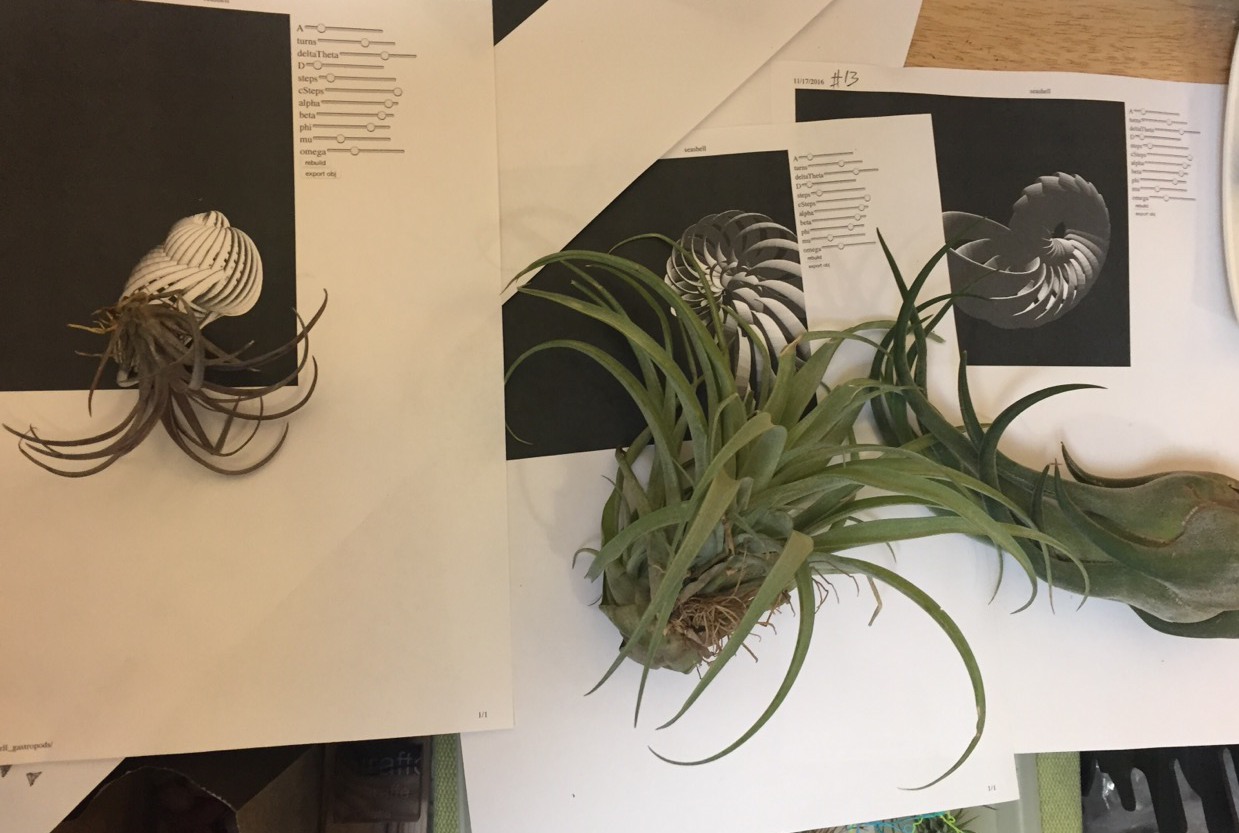 Picture of Find a Home for the Airplants