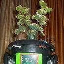 FEDORA 1.0 , an Intelligent Flower Pot