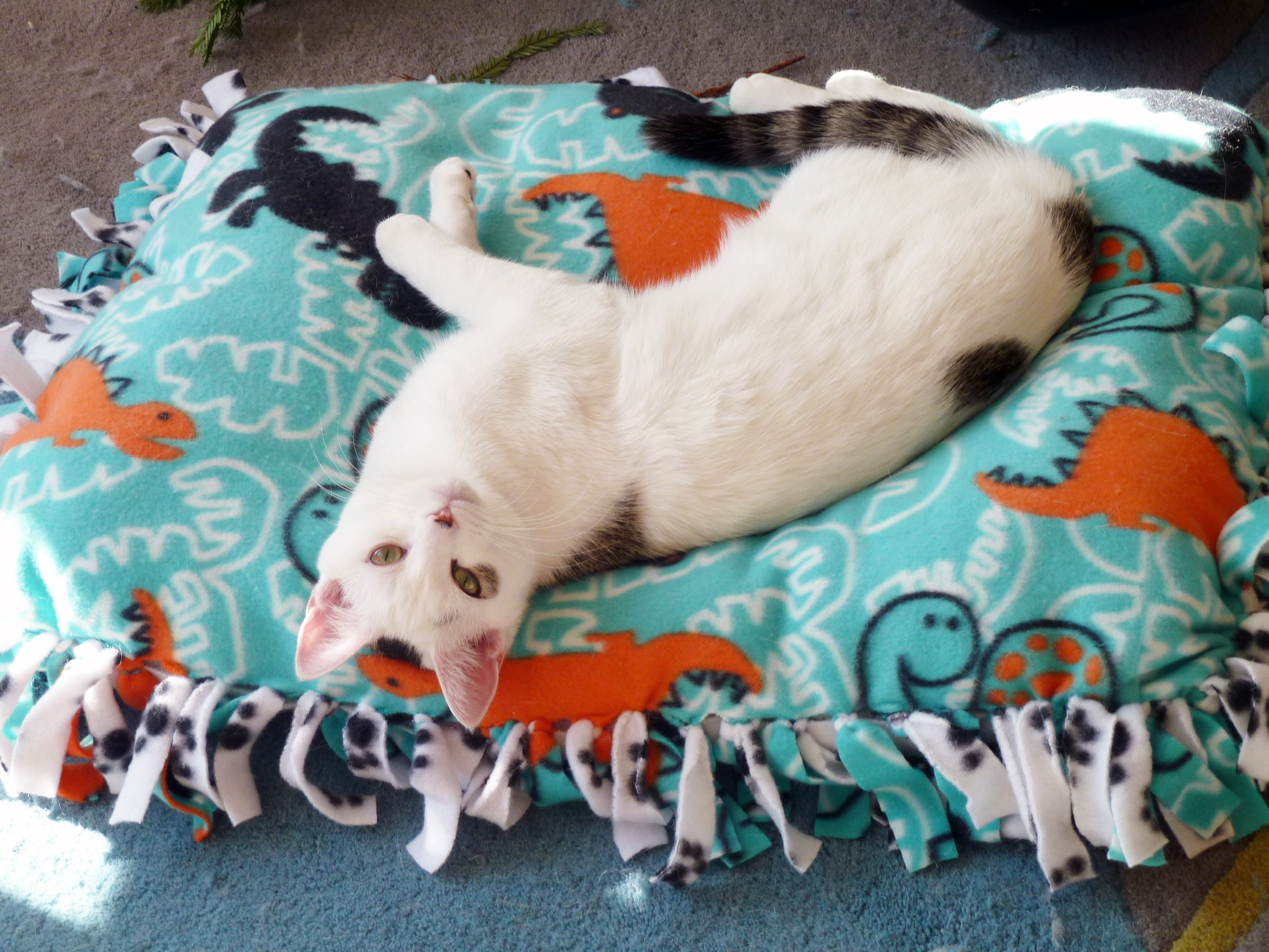 Picture of No Sew Pet Bed