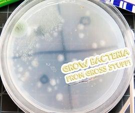 Grow Bacteria From Gross Stuff!