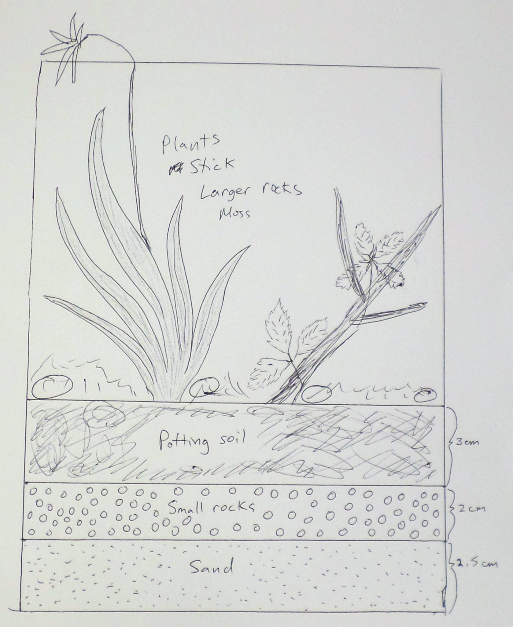 Picture of Planning the Terrarium