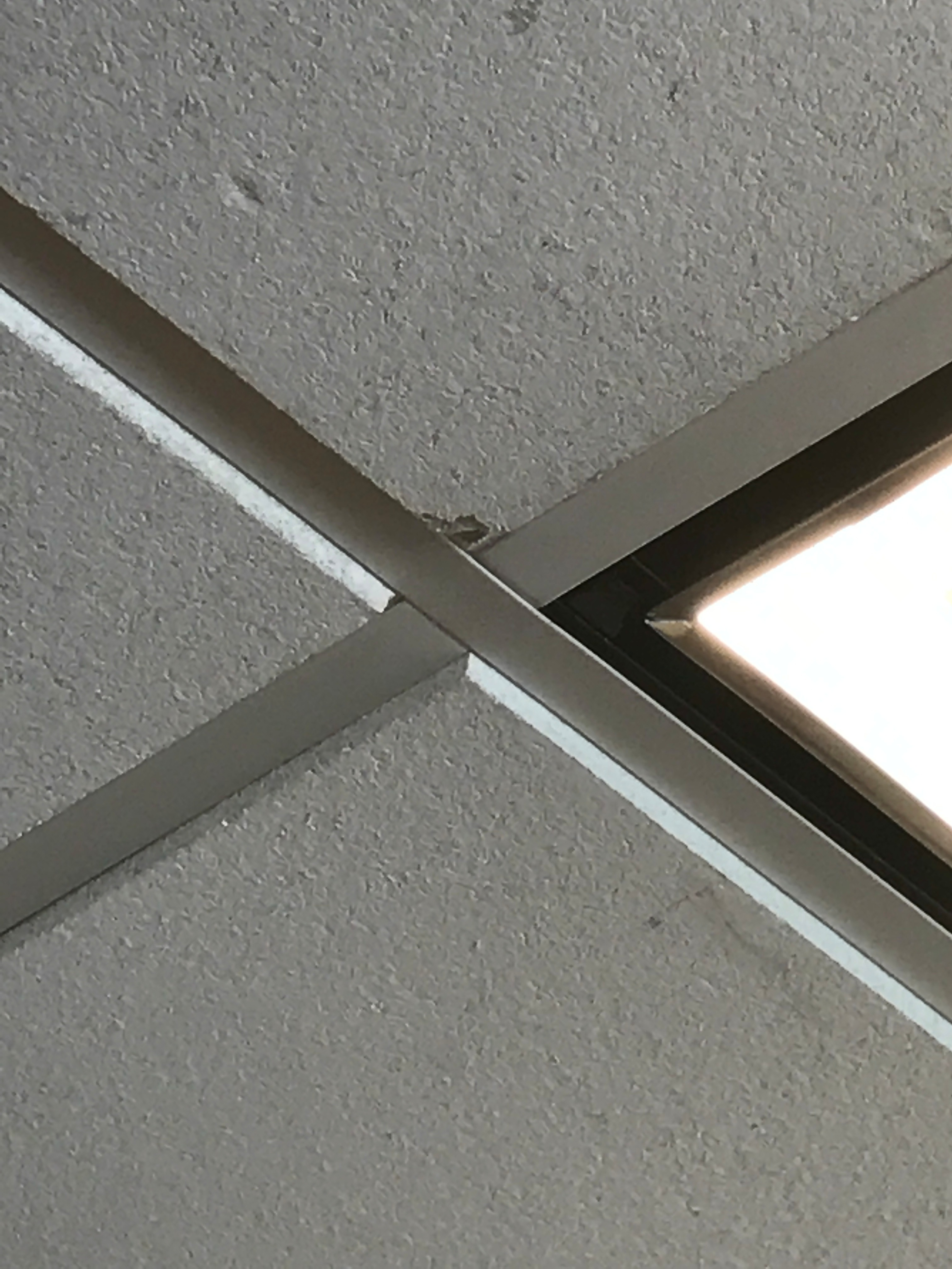 Picture of Attach to the Ceiling Tile