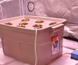Homemade Deep Water Culture Hydroponics System