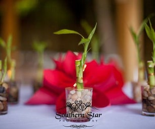 Live Bamboo Wedding Favors - Budget Friendly