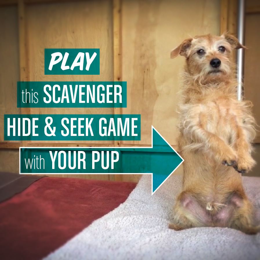 "Picture of Scavenger ""Hide & Seek"" Game for Dogs"