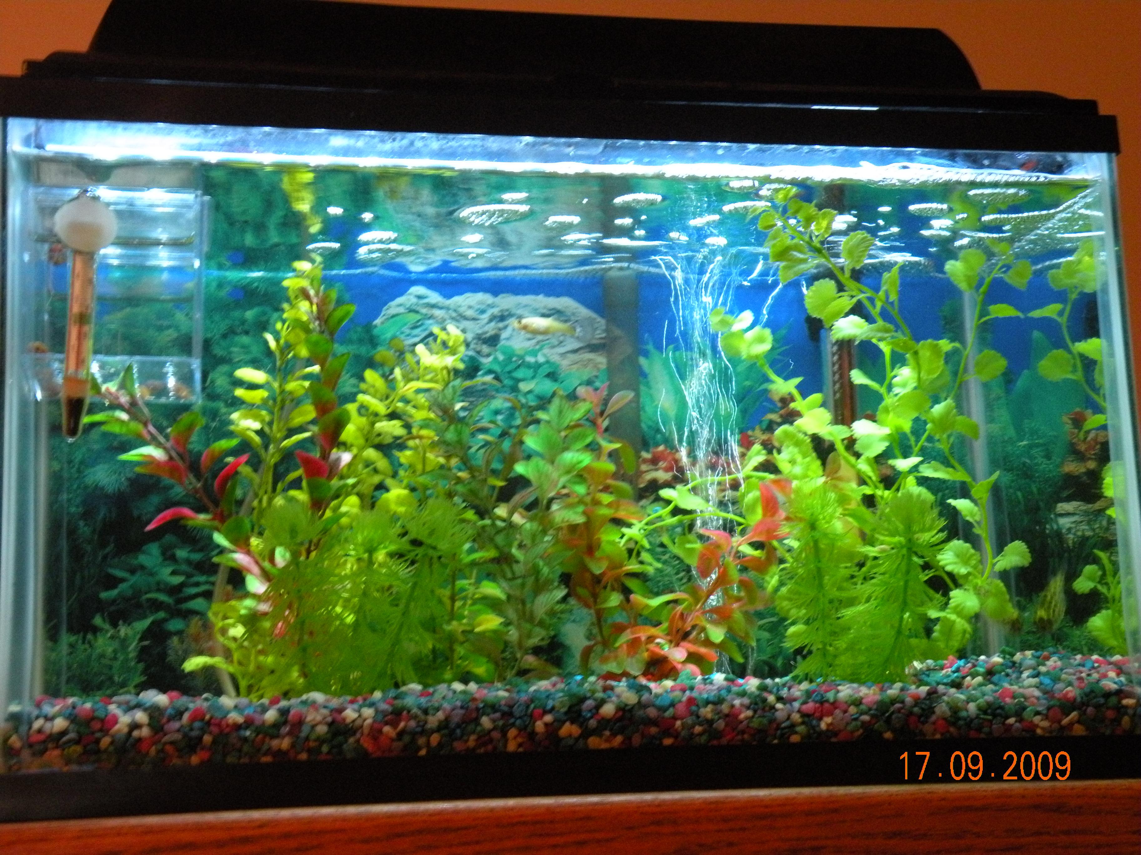 Coolest fish for freshwater aquarium - Led Aquarium Lighting