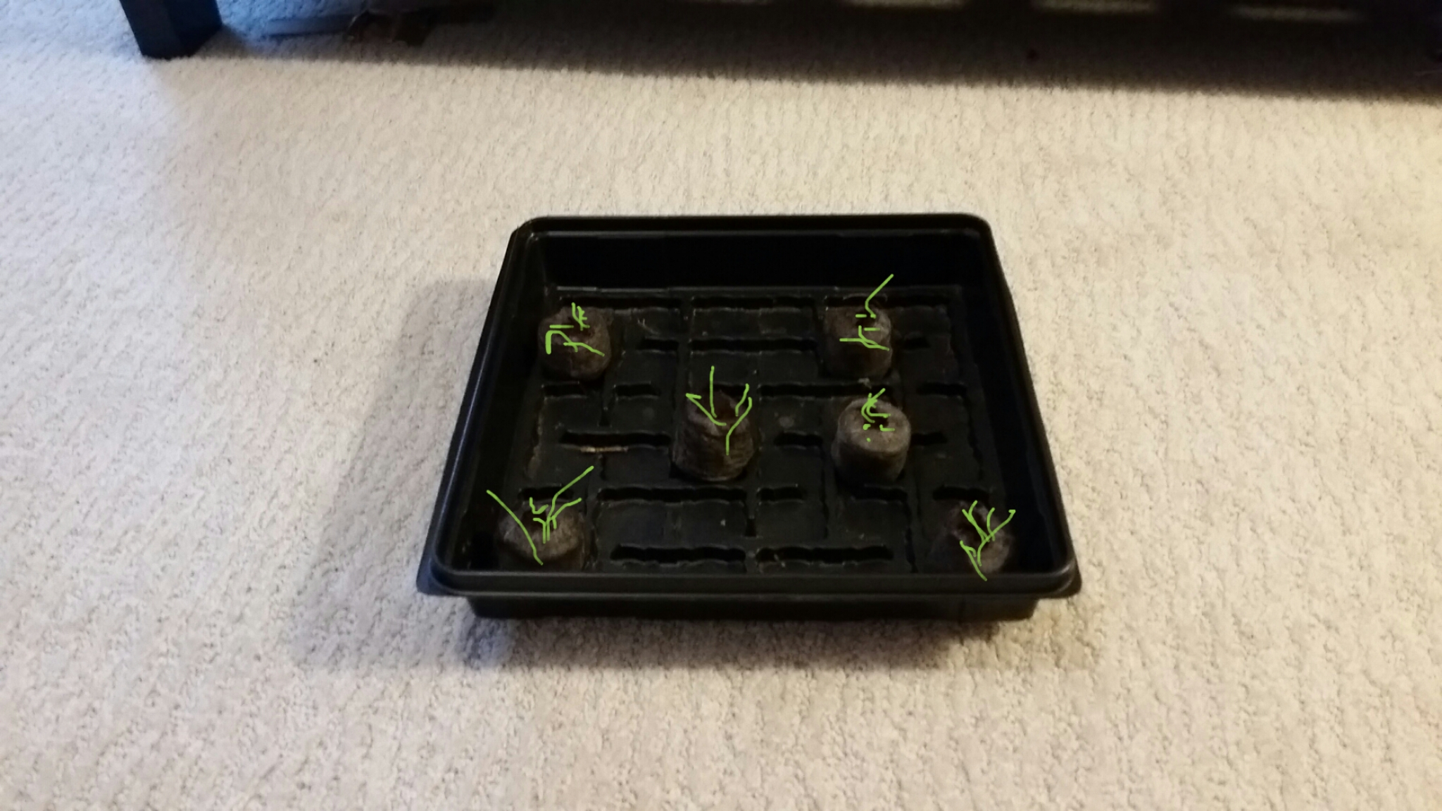 Picture of How to Grow a Farm From a Vegitable for Free