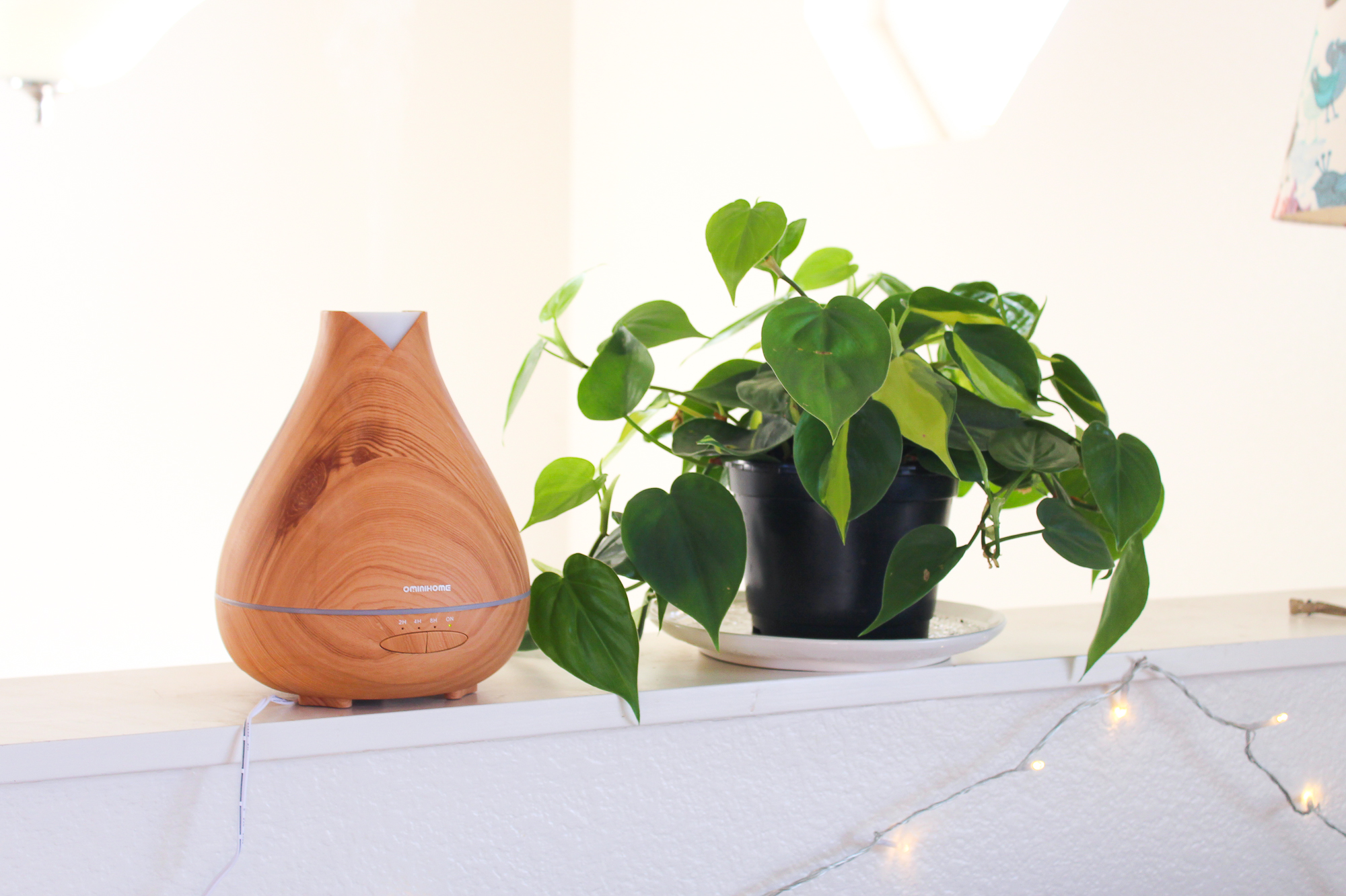 Picture of How to Increase Humidity for Houseplants