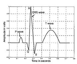 Electrocardiogram (ECG) Circuit