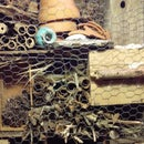 Bee Condo Insect Hotel