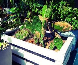 Wooden Fruit Box Planter