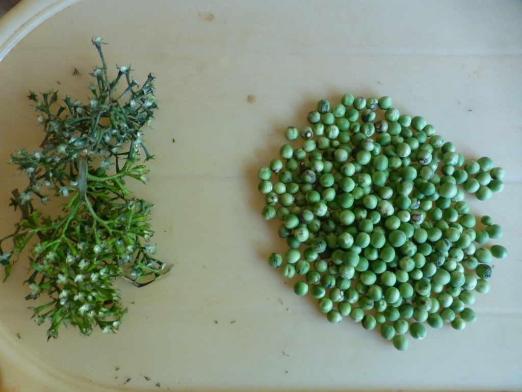 Picture of Harvest the Berries