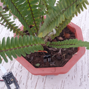 Plant Monitoring and Alerts With ESP8266 and AskSensors IoT Cloud