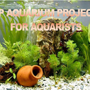 Top Aquarium Projects for Aquarists
