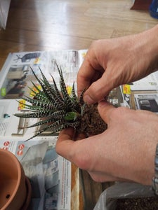 Composing and Planting