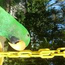 Fun Flowerpot Parrot Feeder