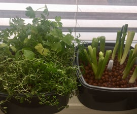 Easy No Tools Indoor Hydroponic Herb Garden (For Under $20)
