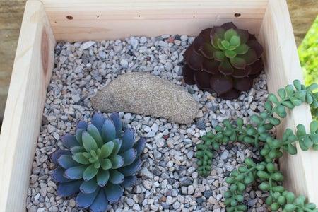 Arrange Succulents