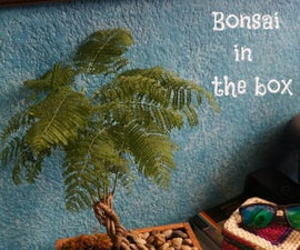 Bonsai in the Box - La Caja Del Bonsai
