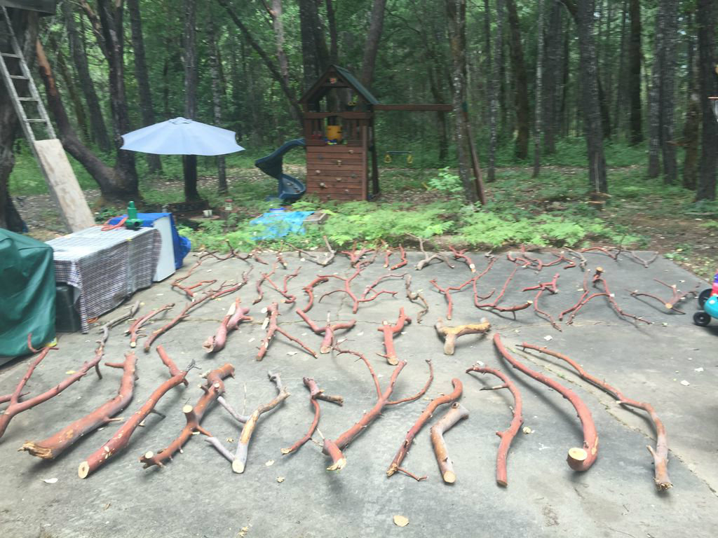 Picture of Cut the Downed Madrone Tree Into Manageable Pieces and Sort Waste