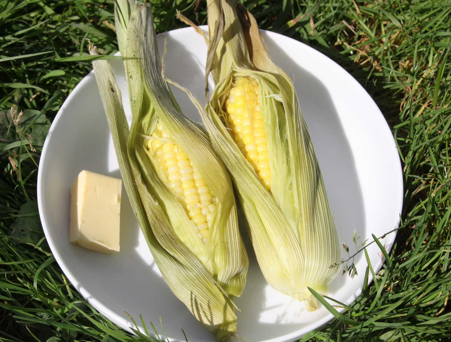 Picture of 'In the Leaf' Solar Cooked Sweetcorn