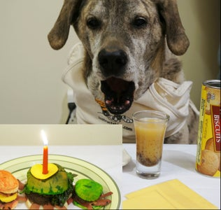 Pet Birthday Cake Recipe With Pictures