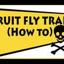 How to make a simple fruit fly trap
